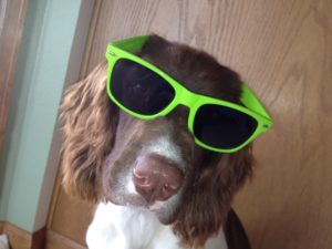 Dog wearing a pair of Jet sunglasses which were offered as a promotional product